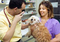 Veterinary Assistant II, Become a: Canine Reproduction