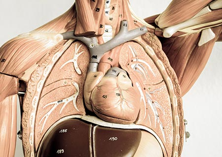 anatomy-and-physiology-courses