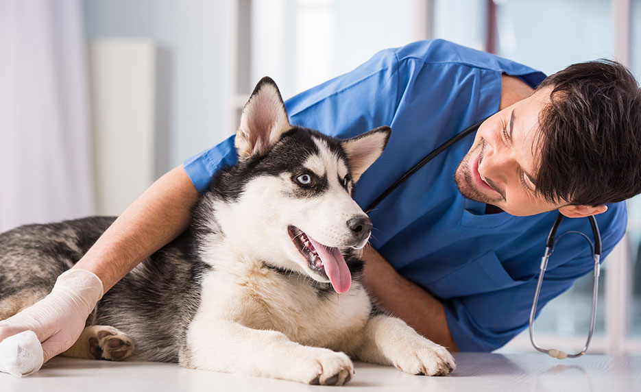 become a veterinary assistant | online class, Human Body