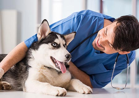 veterinarian-assistant-jobs
