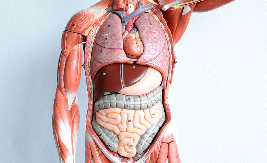 human anatomy and physiology | online course by ed2go, Human Body