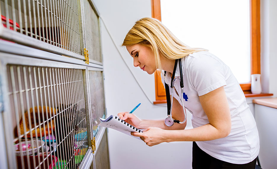 veterinary-assistant-jobs
